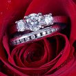 Wedding Ring in Rose, Will you marry me? - Stock Photo