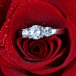 Wedding Ring in Rose, Will you marry me? - Stockfoto