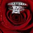 图库照片: Wedding Ring in Rose, Will you marry me?