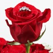 Wedding Ring in Rose, Will you marry me? — ストック写真 #9006804