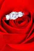 Обручальное кольцо в Роуз, вы мне жениться? — Стоковое фото