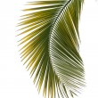 Leaf of palm tree — Foto Stock