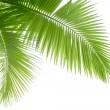 Palm tree — Stock Photo #10398187