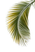 Leaf of palm tree — Stock Photo