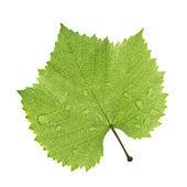 Grape leaf isolated on white — Stock Photo