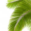 Leaves of palm tree — Stock Photo #8063096