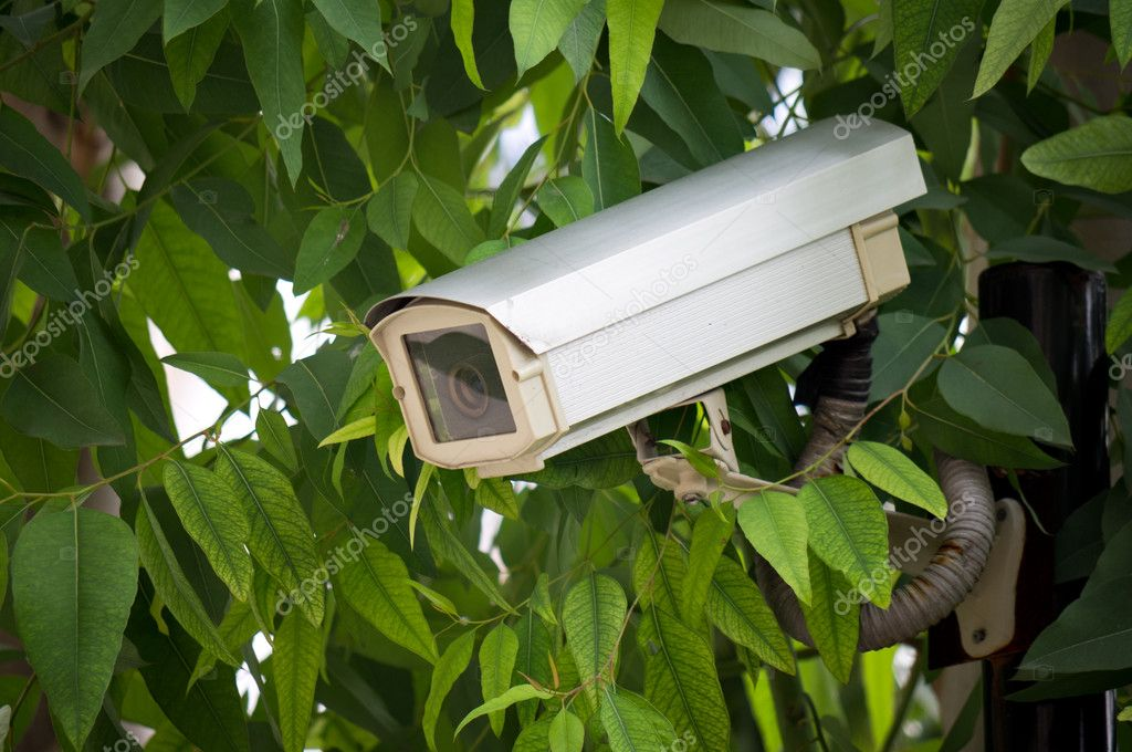 Surveillance camera hided  on tree to oversee somewhere — Stock Photo #9276664