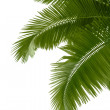 Leaves of palm tree — Stock Photo #9593826