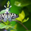 A butterfly on a flower - Photo