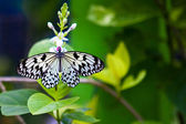 A butterfly on a flower — Stock Photo