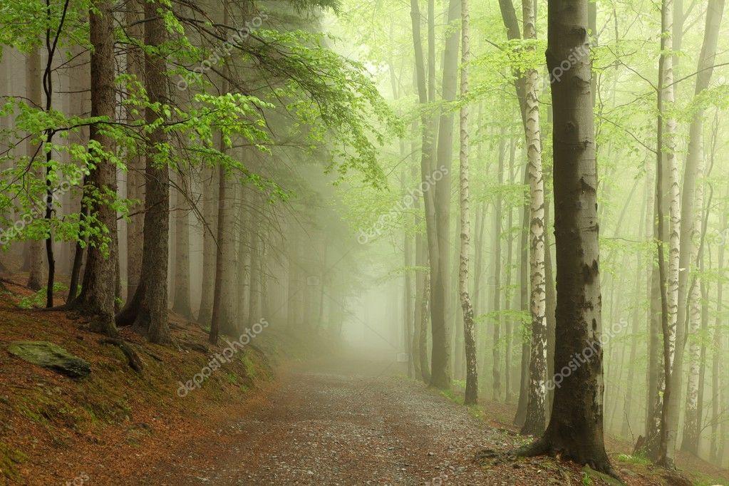Фотообои Весенний буковый лес в тумане