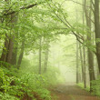 Forest trail in the fog — Stock Photo