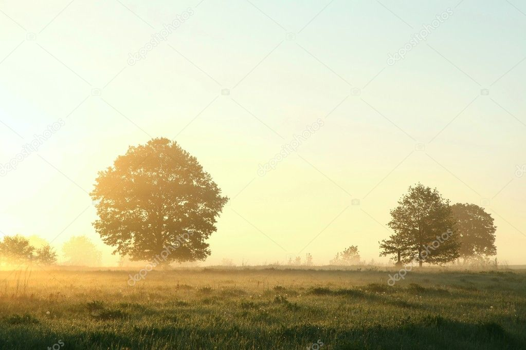 Tree in a meadow on a foggy spring morning.  Stock Photo #10489947
