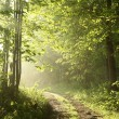 Forest path in the morning — Stock Photo