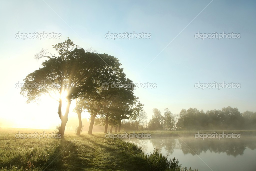 Spring morning on the edge of the lake.  Stock Photo #10690922