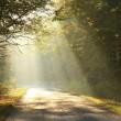 Forest road in autumn morning — Stock Photo #8055326