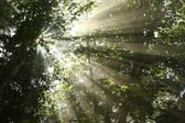 Sunlight passes through the maple trees — Stock Photo