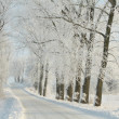 Winter lane — Stock Photo