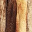 Beige fur coats — Stock Photo
