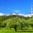 Big television transmitter and landscape view of the Caucasus Mo — Stock Photo