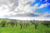 Jardín de manzanos en flor en la primavera. sol en el cielo. — Foto de Stock