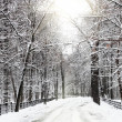 Silent snow-covered urban park in winter. - Stock Photo