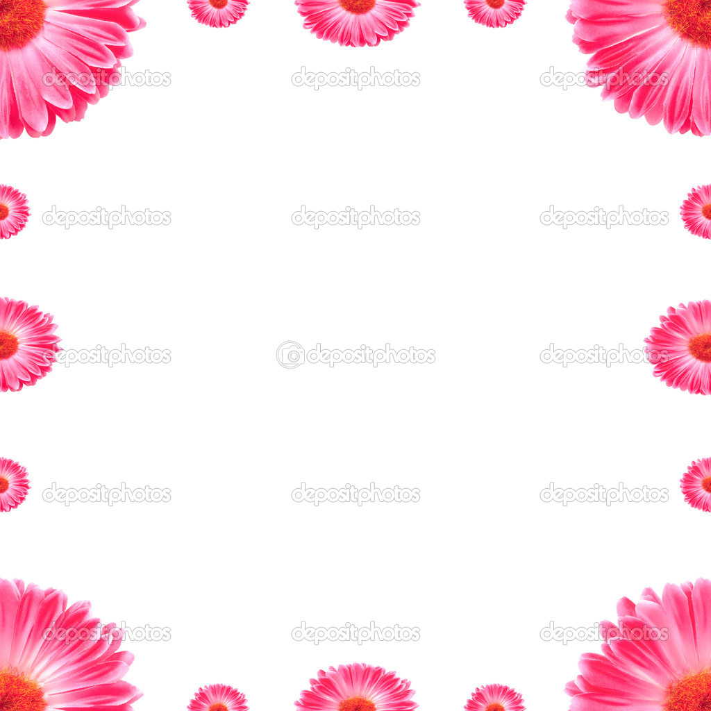 Frame Pink Gerbera Flowers Isolated On White  Stock Photo #9564287