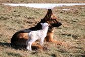 Dog and lamb — Stock Photo