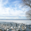 Stock Photo: Swans on lake