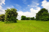 Green grass,trees and cloudy sky — Stock Photo