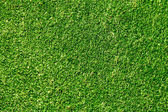Ideal green grass, can be used as background — Stock Photo