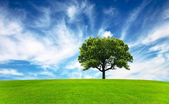 Green field, tree and blue sky — Stock Photo