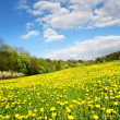 Beautiful spring landscape with a dandelion meadow — Stock Photo #8707896