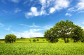 Schöne grüne landschaft — Stockfoto