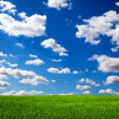 Stock Photo: Grass and sky
