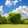 Idyllic spring landscape — Stock Photo