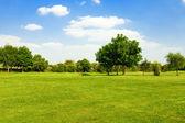 Yeşil çimenlerin üzerinde bir golf alanı — Stok fotoğraf