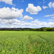 English Countryside In spring — Stock Photo