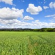 English Countryside In spring — Stock Photo #8868286