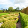 Stock Photo: Garden with Topiary Landscaping