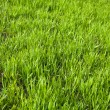 Stock Photo: Green grassy field