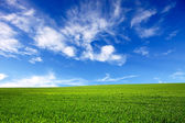 Green field and blue sky-nature background — Stock Photo