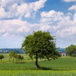 Stock Photo: Countryside, landscape