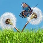 Spring time, conceptual image — Stock Photo