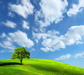 Tree on green field — Stock Photo