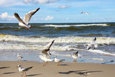Seagulls ower sea — Stock Photo