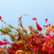 Flowering shrub - Stock Photo
