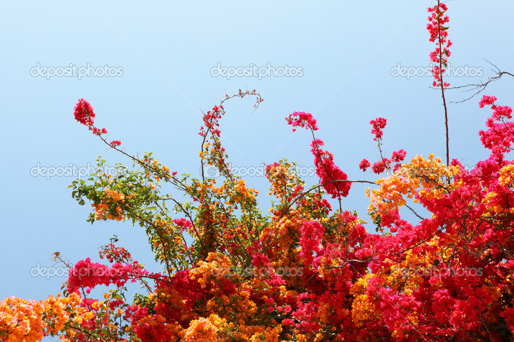 Flowering shrub — Stock Photo #10210497