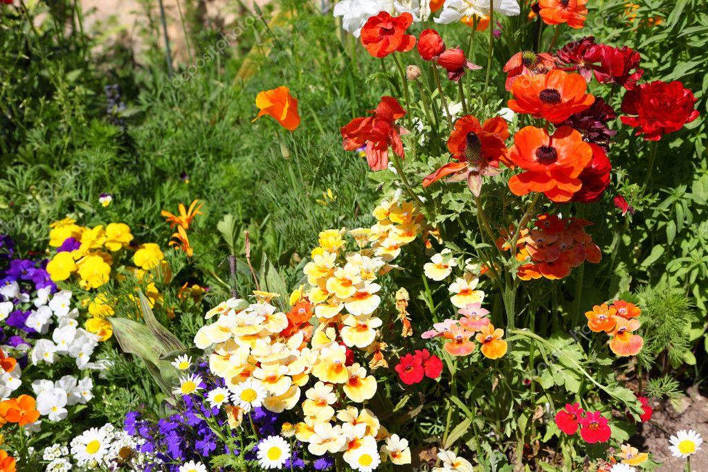 Parterres de fleurs dans un jardin la fran aise for Fleurs dans un jardin