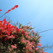 Stock Photo: Tropical Flowering Shrubs